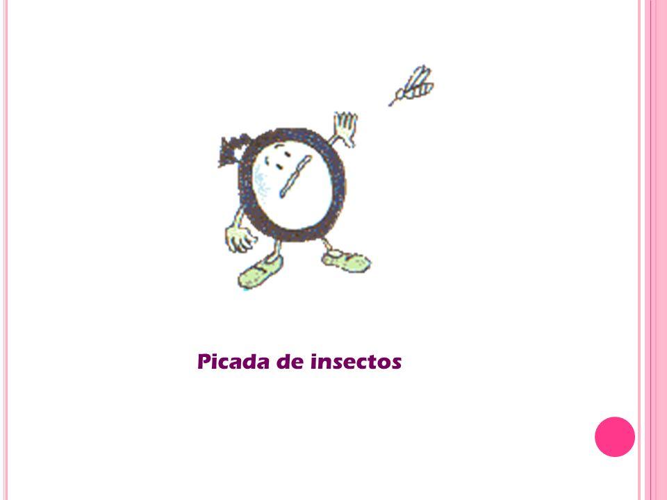 Picada de insectos