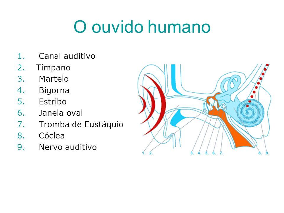 O ouvido humano Canal auditivo Tímpano Martelo Bigorna Estribo