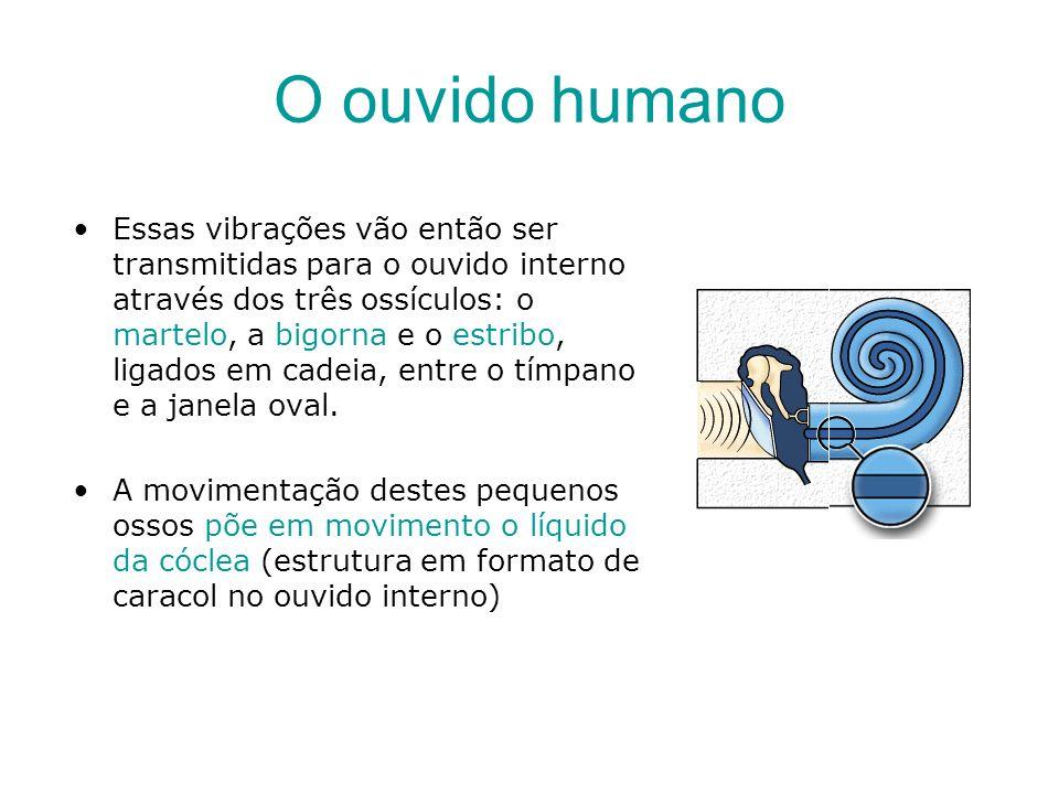O ouvido humano