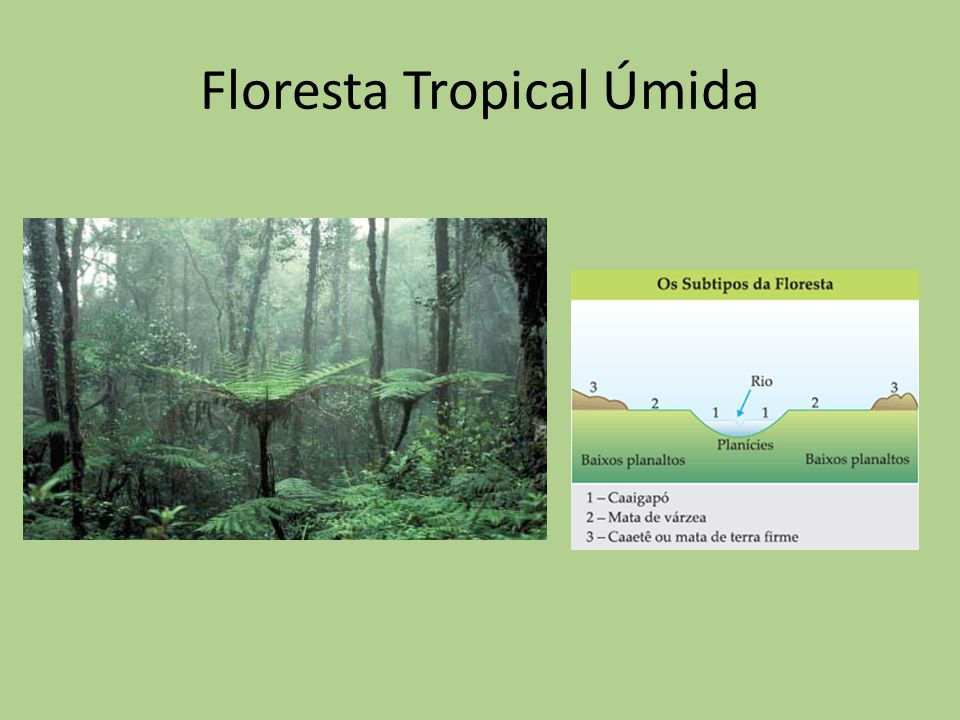 Floresta Tropical Úmida