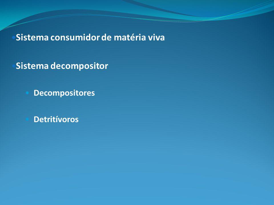 Sistema consumidor de matéria viva Sistema decompositor