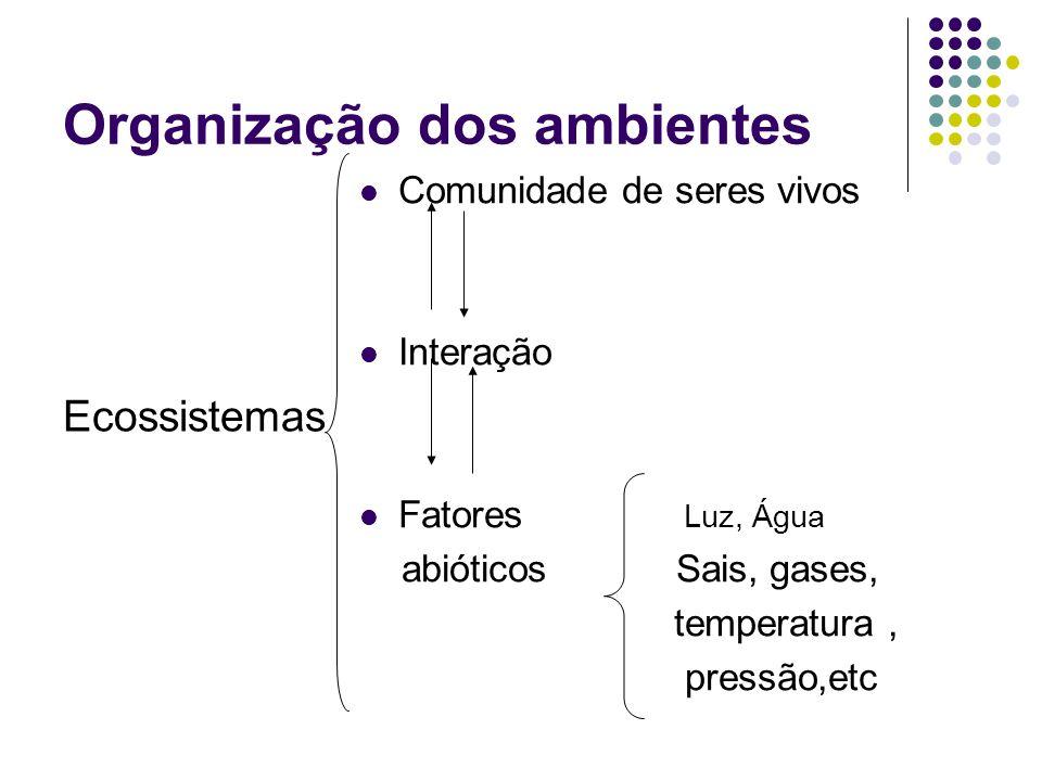 Organização dos ambientes