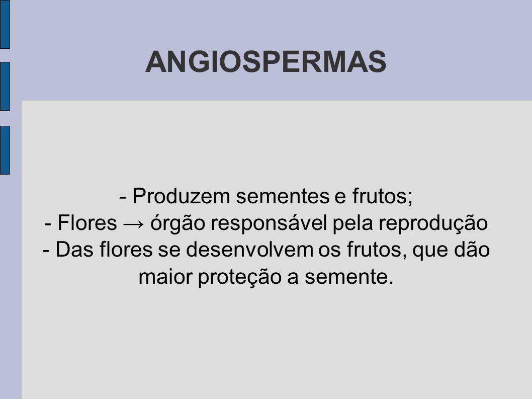 ANGIOSPERMAS - Produzem sementes e frutos;