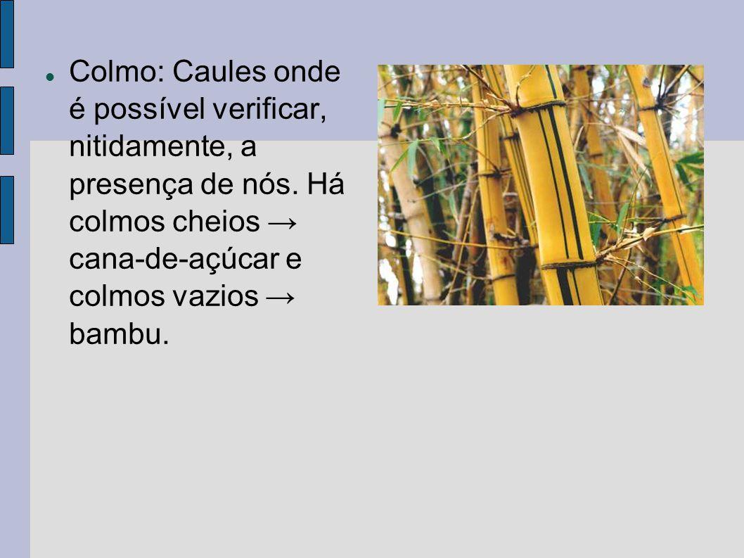 Colmo: Caules onde é possível verificar, nitidamente, a presença de nós.
