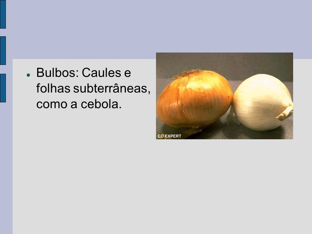 Bulbos: Caules e folhas subterrâneas, como a cebola.