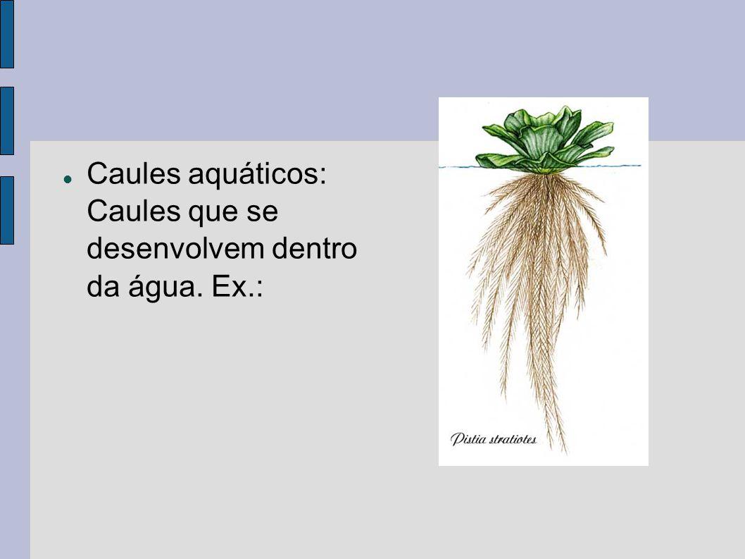 Caules aquáticos: Caules que se desenvolvem dentro da água. Ex.: