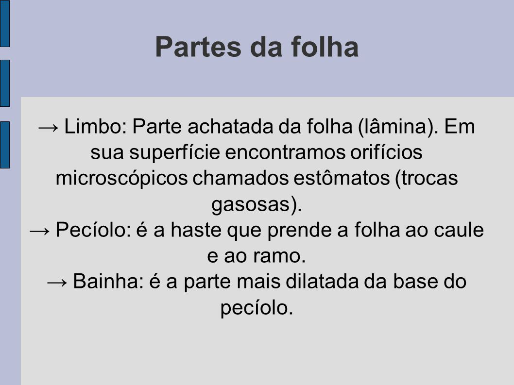 Partes da folha → Limbo: Parte achatada da folha (lâmina). Em sua superfície encontramos orifícios microscópicos chamados estômatos (trocas gasosas).