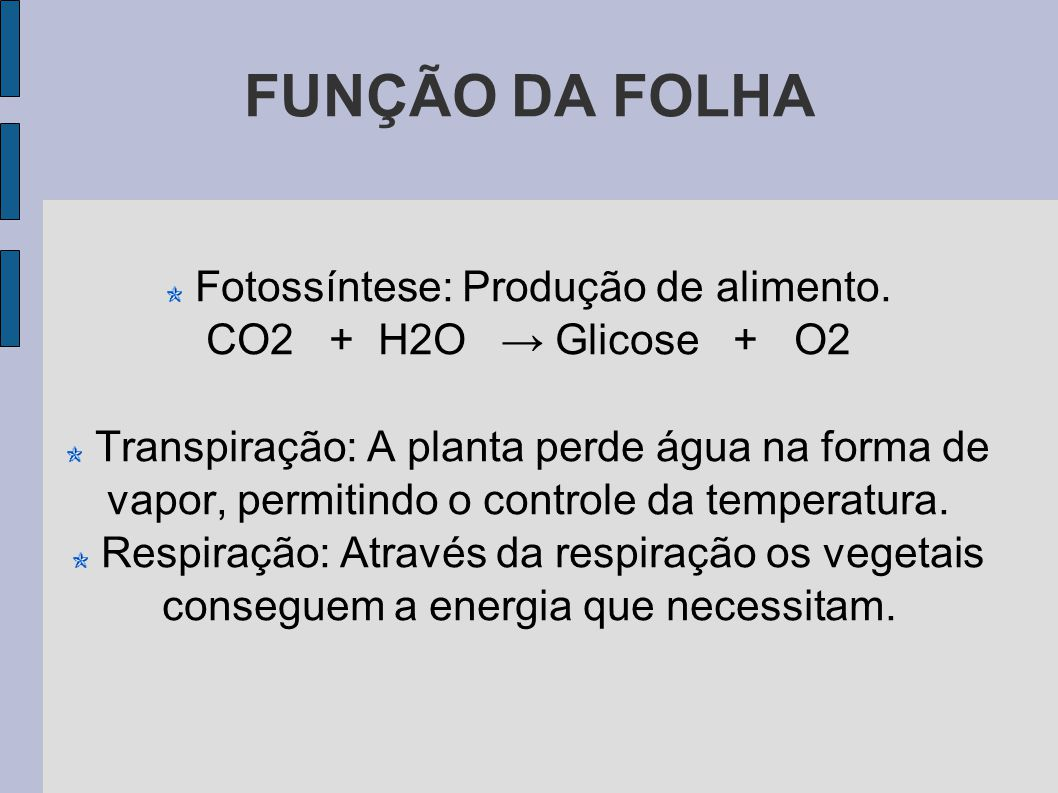 Fotossíntese: Produção de alimento.
