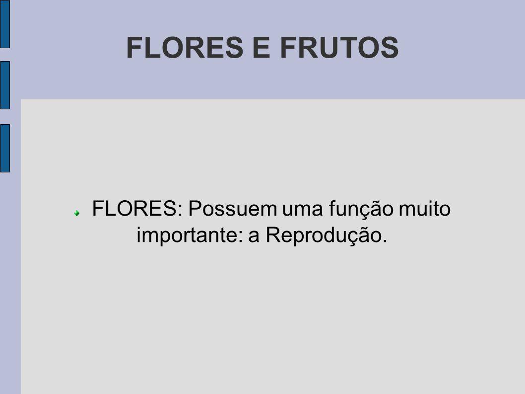 FLORES: Possuem uma função muito importante: a Reprodução.