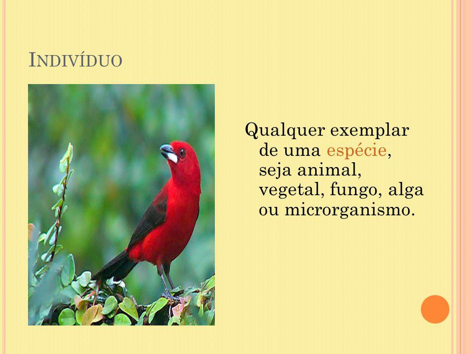 Indivíduo Qualquer exemplar de uma espécie, seja animal, vegetal, fungo, alga ou microrganismo.