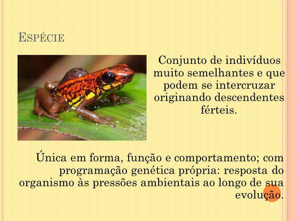 Espécie Conjunto de indivíduos muito semelhantes e que podem se intercruzar originando descendentes férteis.