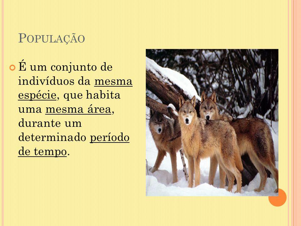 População É um conjunto de indivíduos da mesma espécie, que habita uma mesma área, durante um determinado período de tempo.