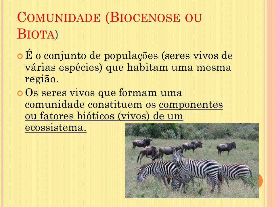 Comunidade (Biocenose ou Biota)