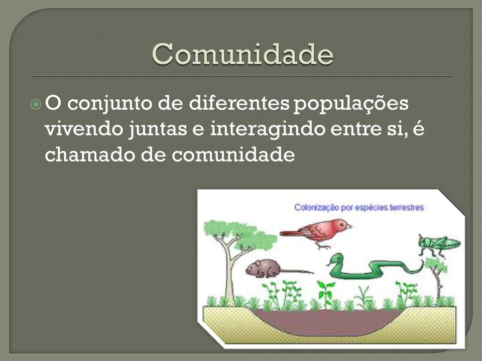 Comunidade O conjunto de diferentes populações vivendo juntas e interagindo entre si, é chamado de comunidade.