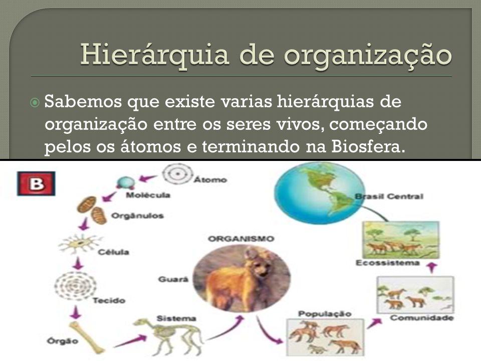 Hierárquia de organização