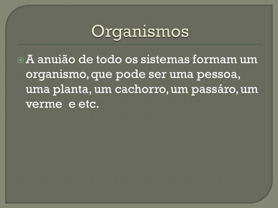Organismos A anuião de todo os sistemas formam um organismo, que pode ser uma pessoa, uma planta, um cachorro, um passáro, um verme e etc.