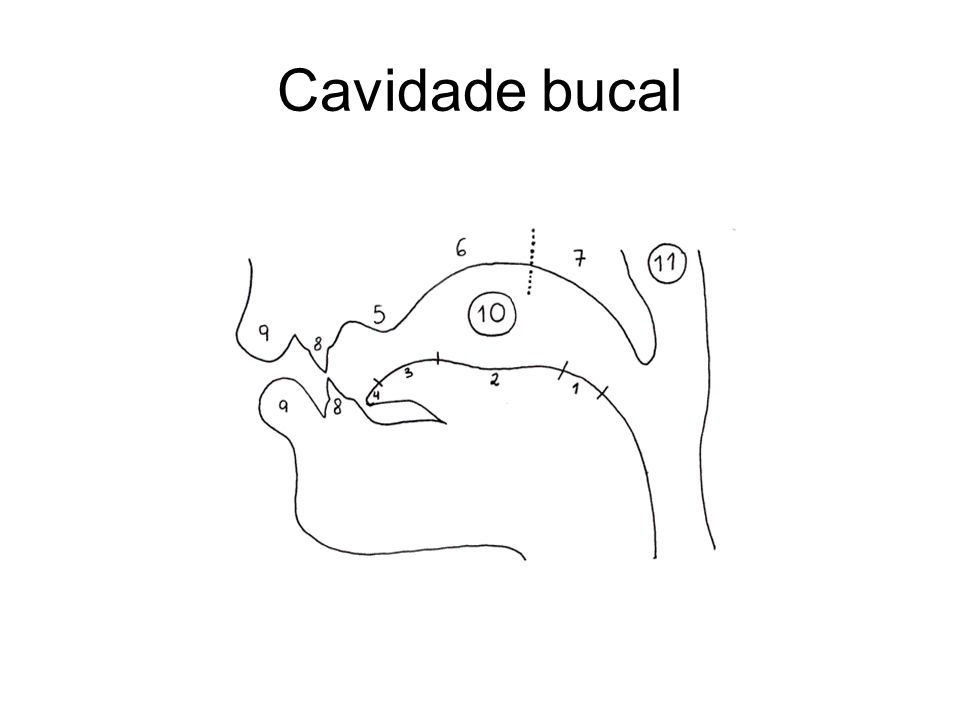 Cavidade bucal