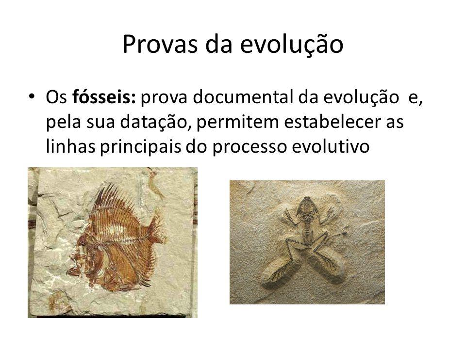 Provas da evolução Os fósseis: prova documental da evolução e, pela sua datação, permitem estabelecer as linhas principais do processo evolutivo.