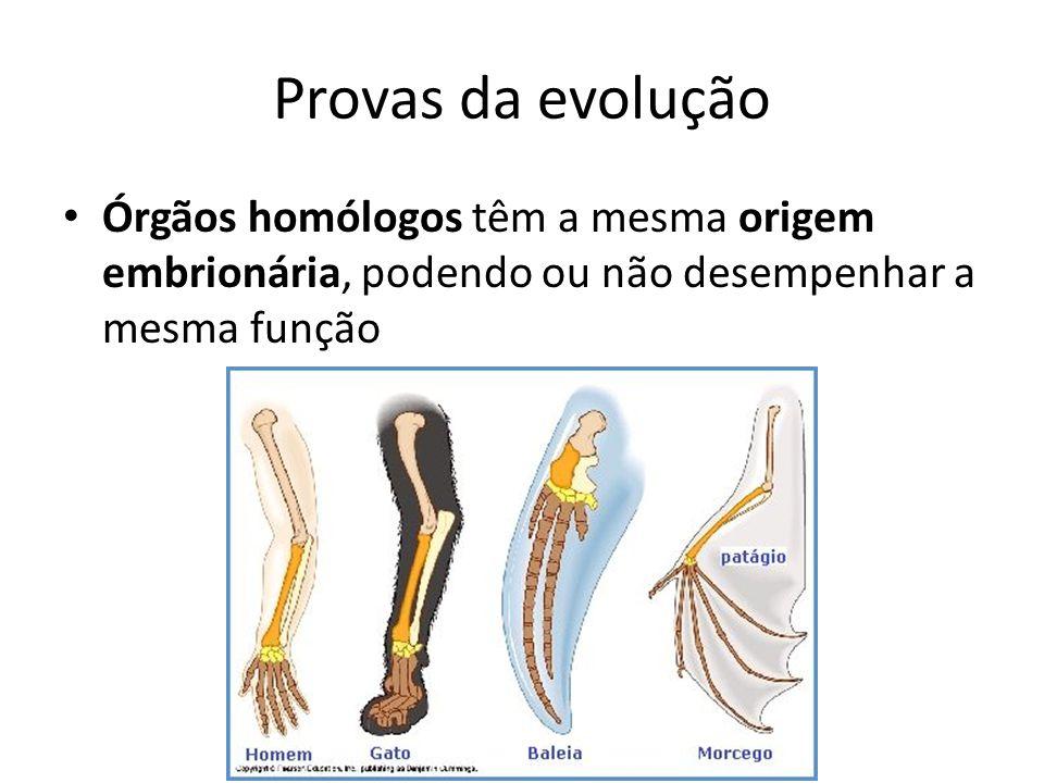 Provas da evolução Órgãos homólogos têm a mesma origem embrionária, podendo ou não desempenhar a mesma função.