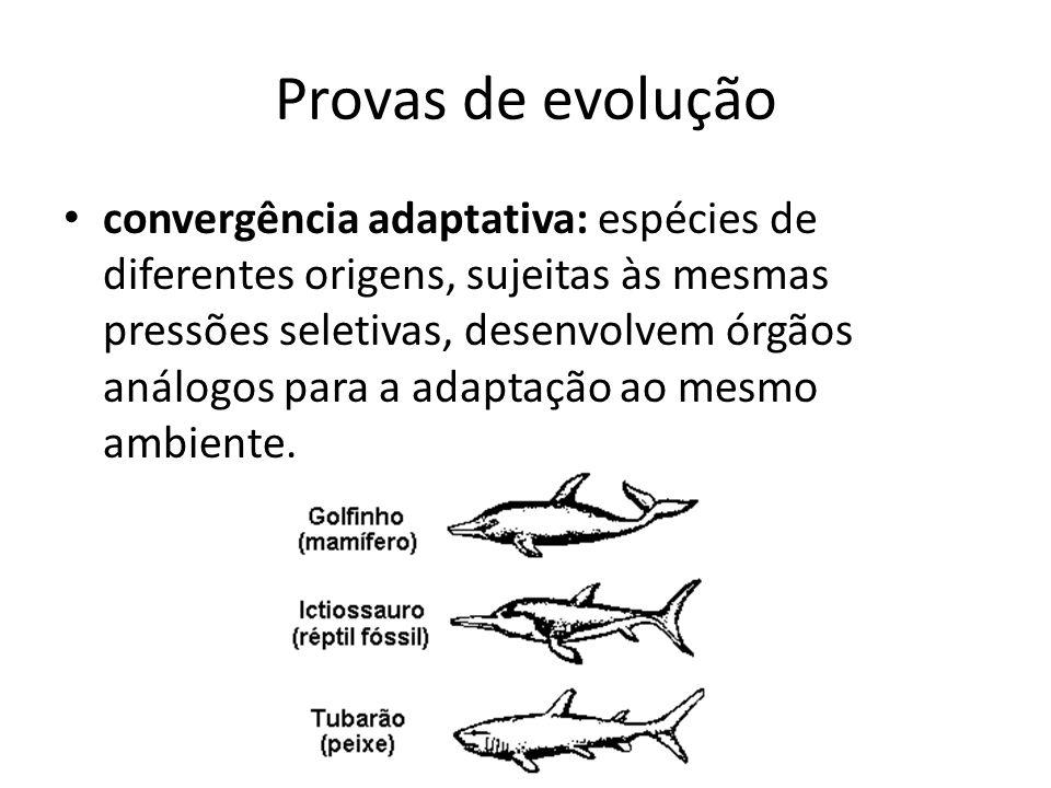 Provas de evolução