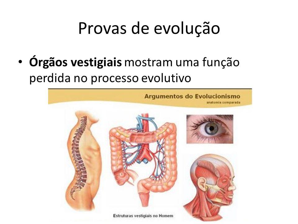 Provas de evolução Órgãos vestigiais mostram uma função perdida no processo evolutivo