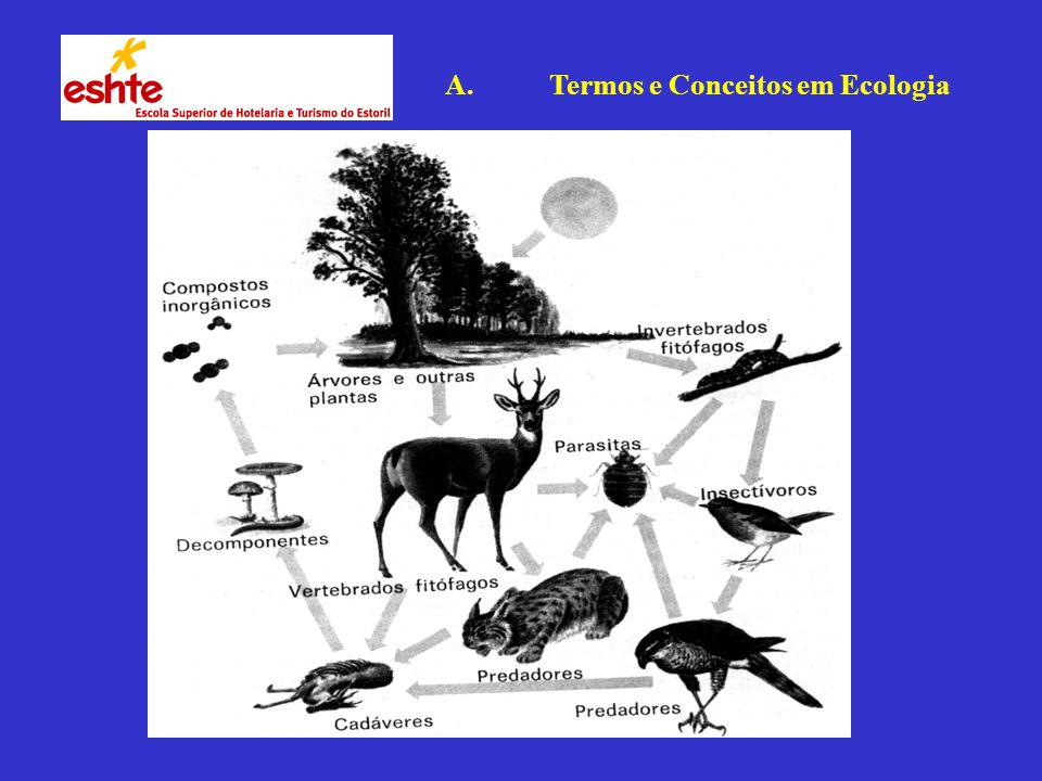 A. Termos e Conceitos em Ecologia