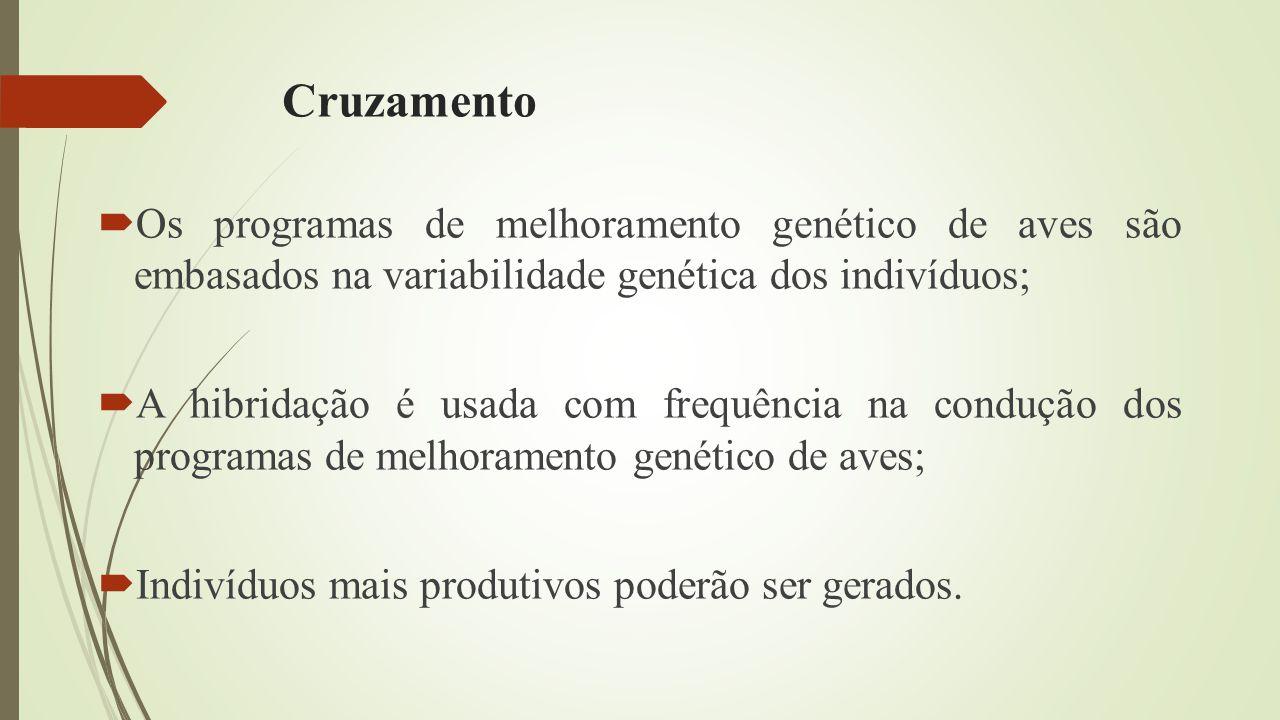 Cruzamento Os programas de melhoramento genético de aves são embasados na variabilidade genética dos indivíduos;