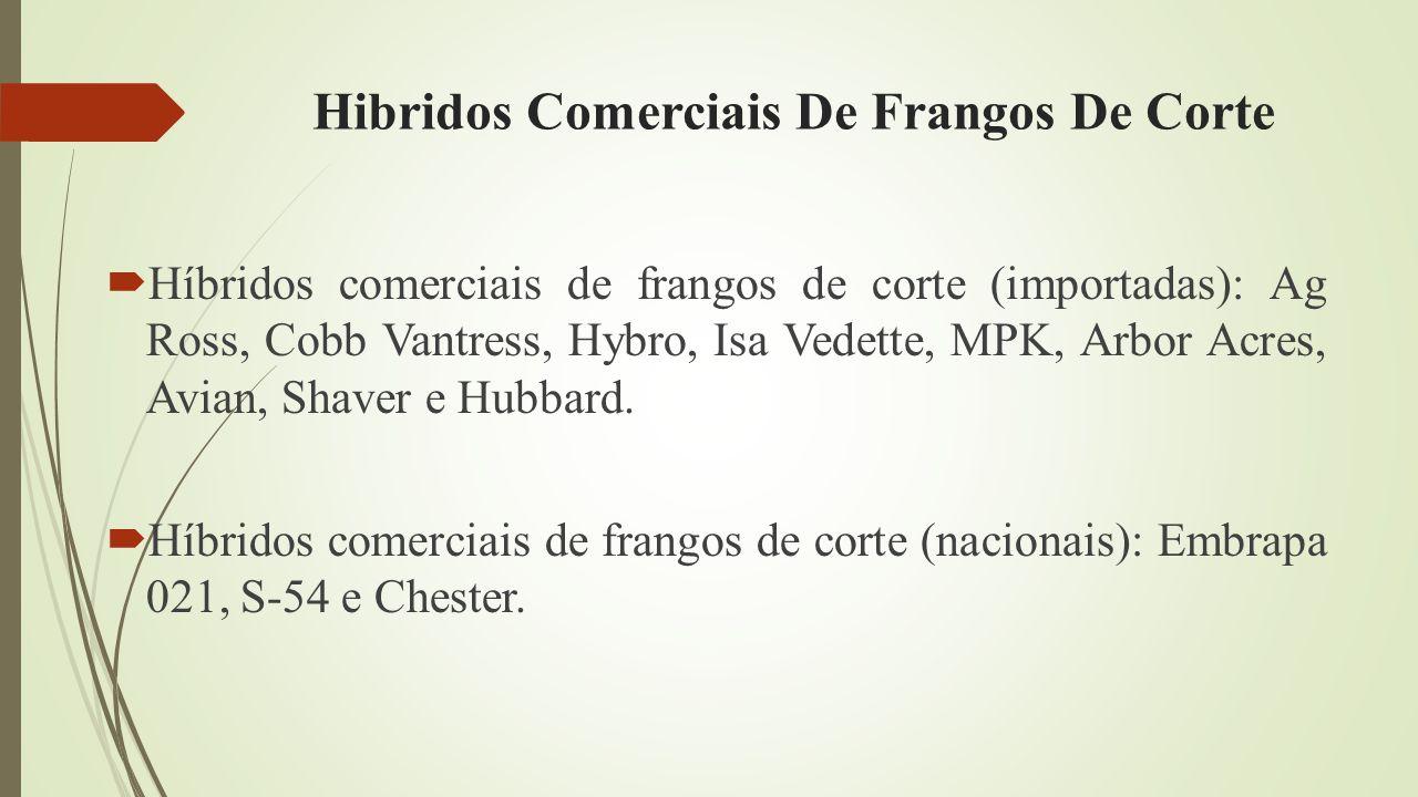 Hibridos Comerciais De Frangos De Corte
