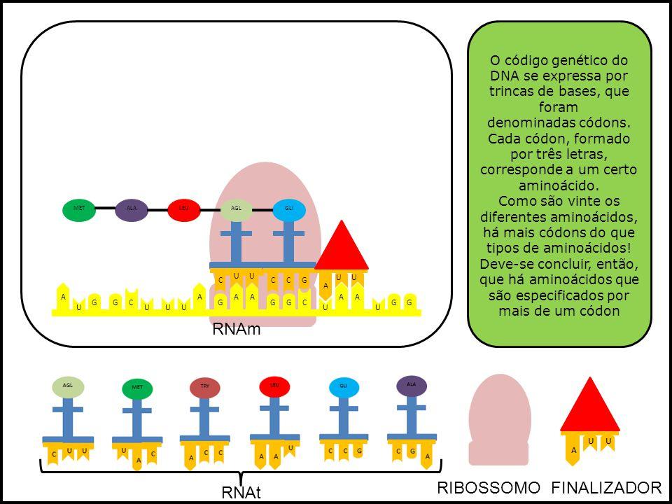 RNAm RIBOSSOMO FINALIZADOR RNAt
