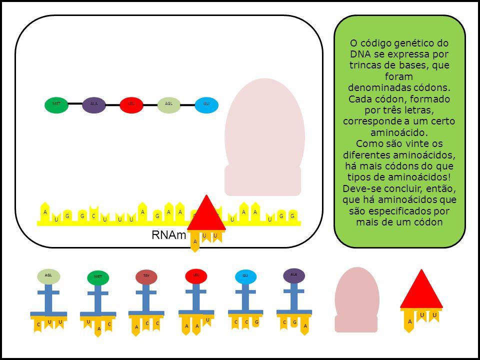 O código genético do DNA se expressa por trincas de bases, que foram denominadas códons. Cada códon, formado por três letras, corresponde a um certo aminoácido.