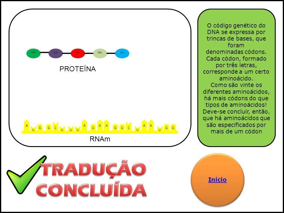 TRADUÇÃO CONCLUÍDA PROTEÍNA RNAm