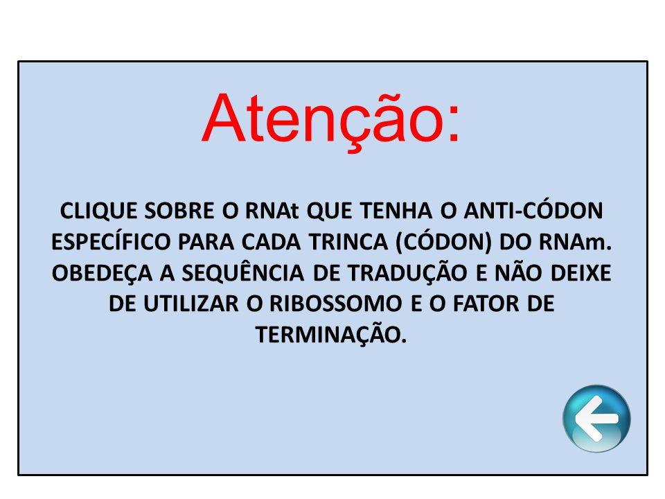 Atenção: CLIQUE SOBRE O RNAt QUE TENHA O ANTI-CÓDON ESPECÍFICO PARA CADA TRINCA (CÓDON) DO RNAm.