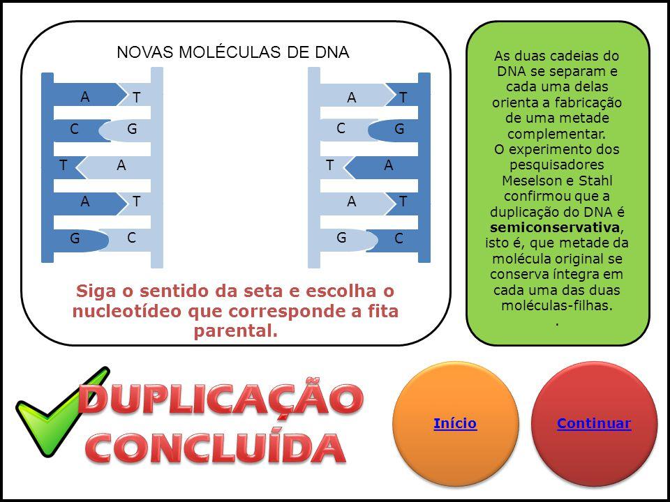 DUPLICAÇÃO CONCLUÍDA NOVAS MOLÉCULAS DE DNA T A A T G C C G A T T A T