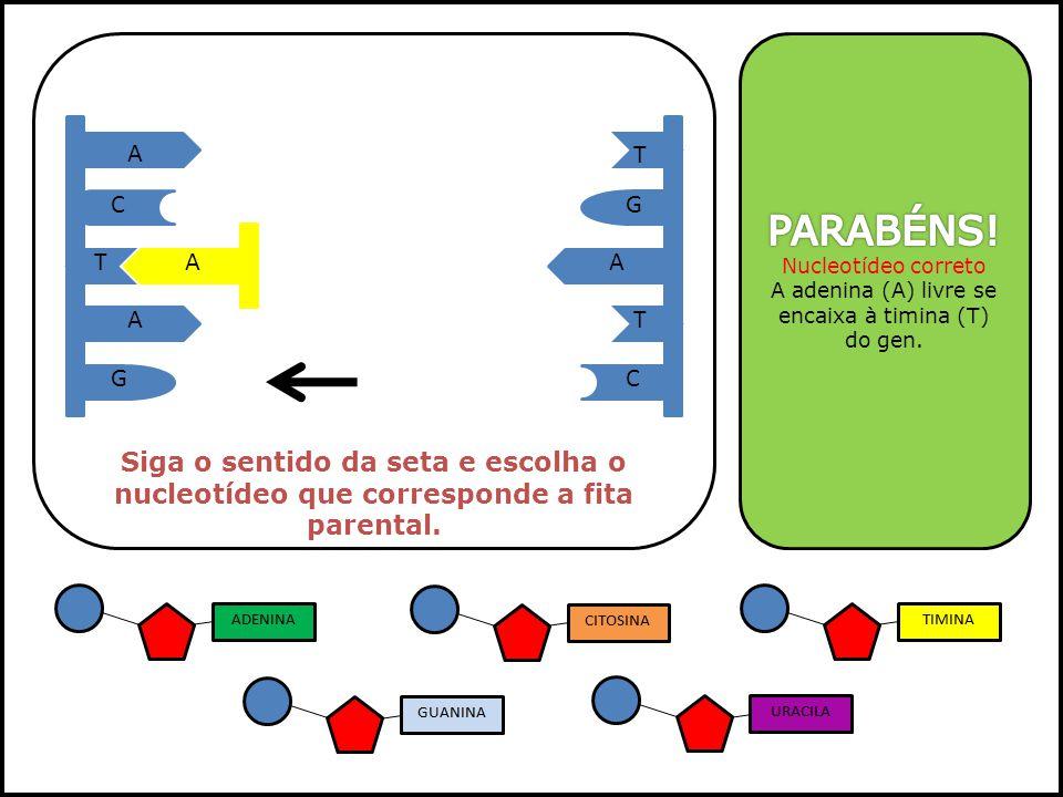 A adenina (A) livre se encaixa à timina (T) do gen.