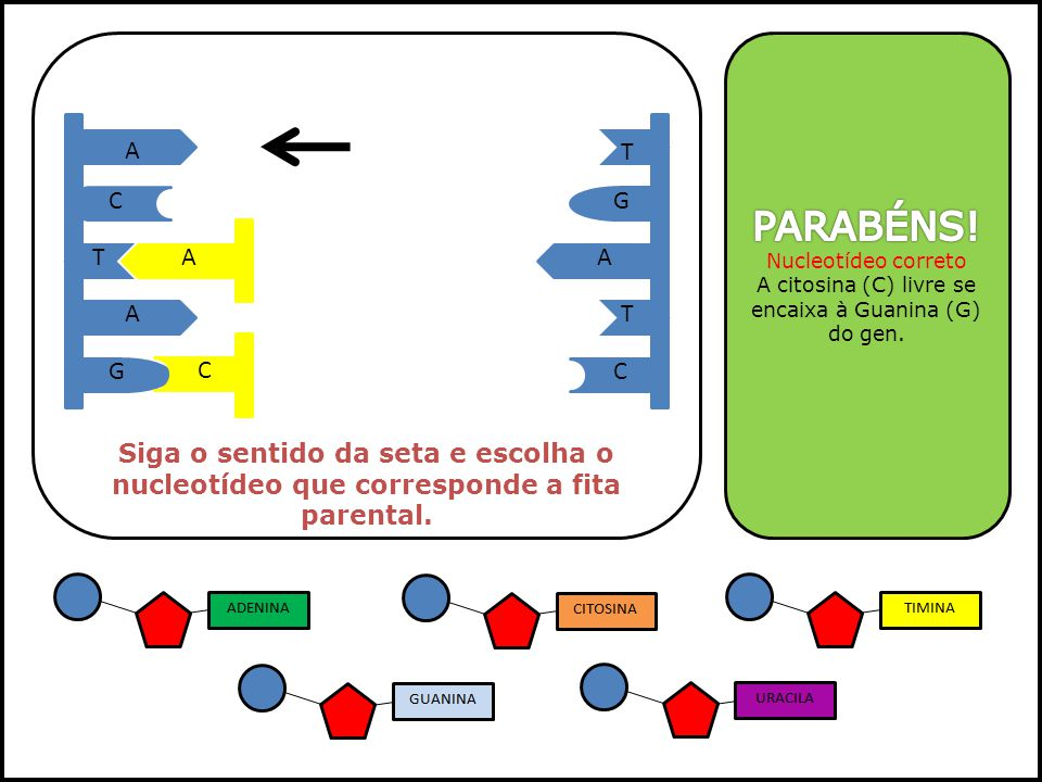 A citosina (C) livre se encaixa à Guanina (G) do gen.