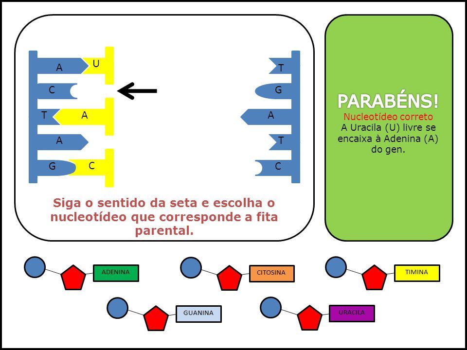 A Uracila (U) livre se encaixa à Adenina (A) do gen.