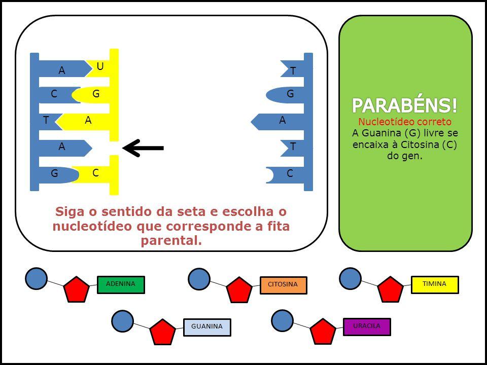 A Guanina (G) livre se encaixa à Citosina (C) do gen.