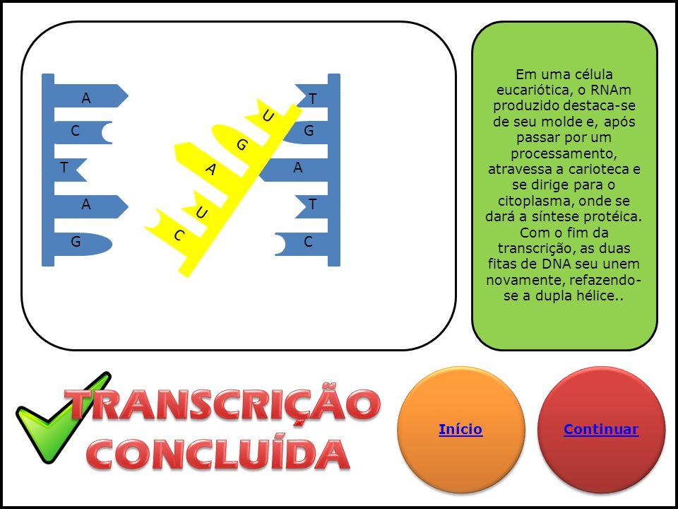 TRANSCRIÇÃO CONCLUÍDA