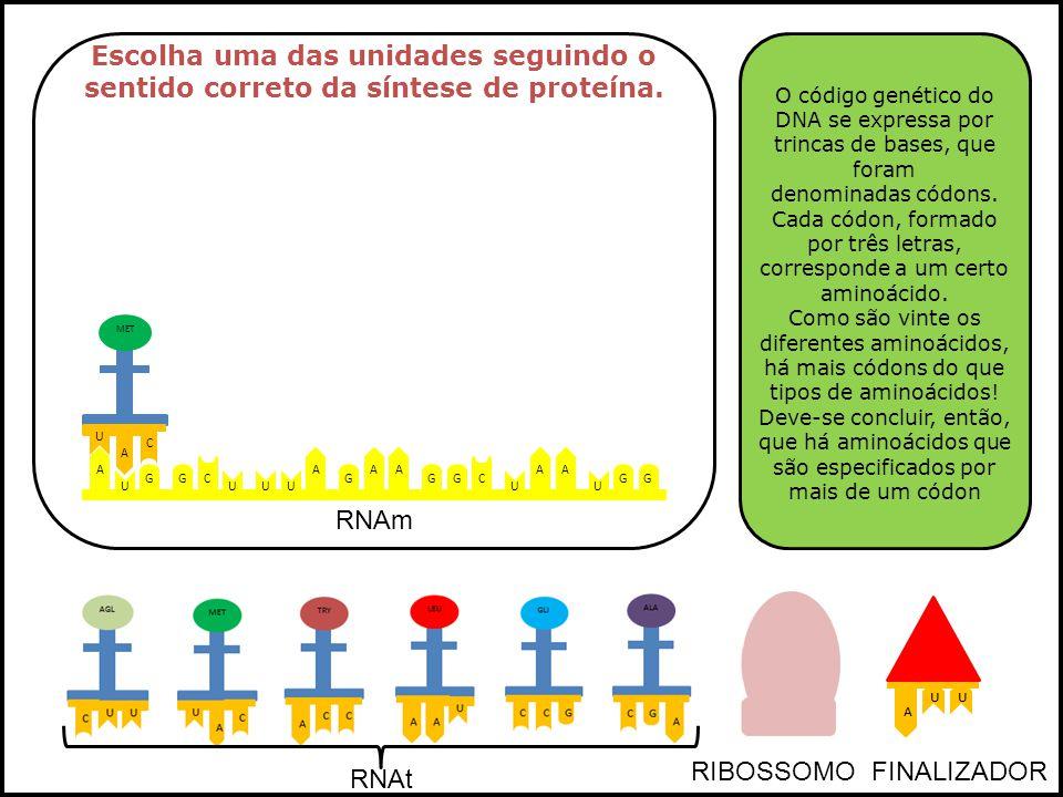 Escolha uma das unidades seguindo o sentido correto da síntese de proteína.