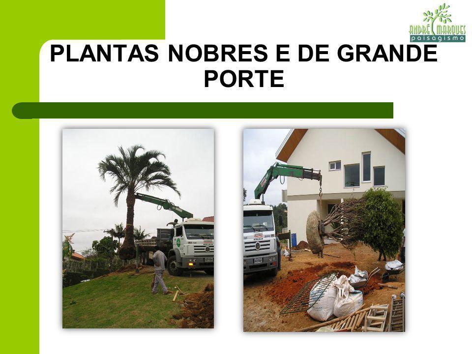 PLANTAS NOBRES E DE GRANDE PORTE