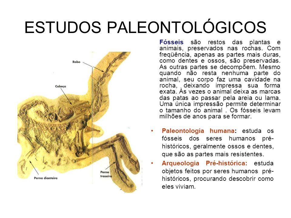 ESTUDOS PALEONTOLÓGICOS