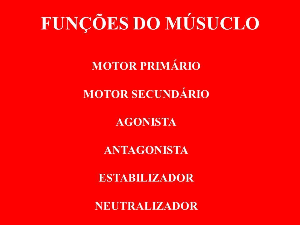 FUNÇÕES DO MÚSUCLO MOTOR PRIMÁRIO MOTOR SECUNDÁRIO AGONISTA