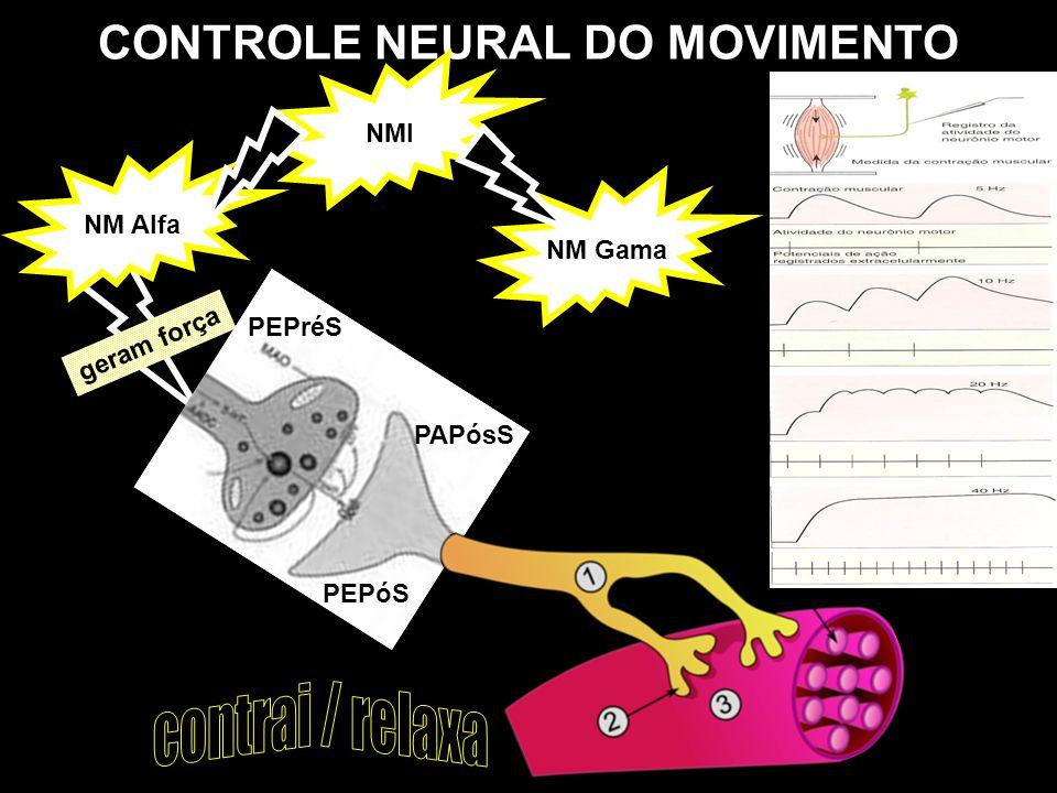 CONTROLE NEURAL DO MOVIMENTO