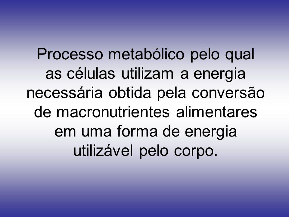 Processo metabólico pelo qual