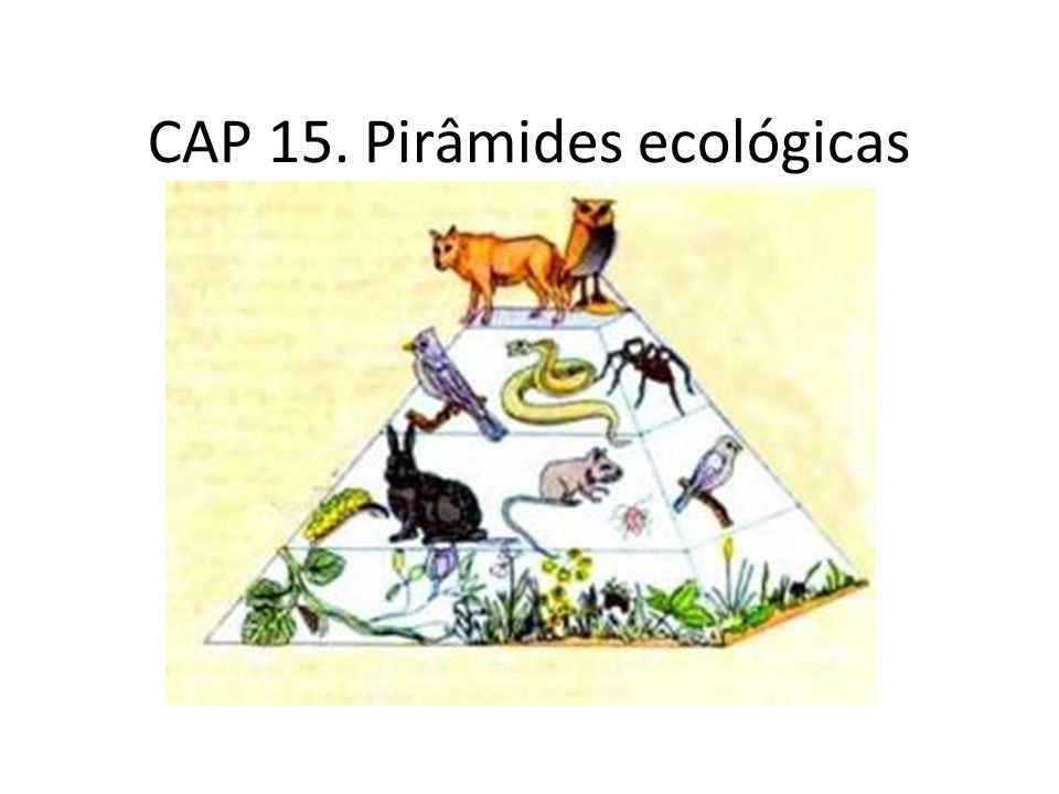 CAP 15. Pirâmides ecológicas