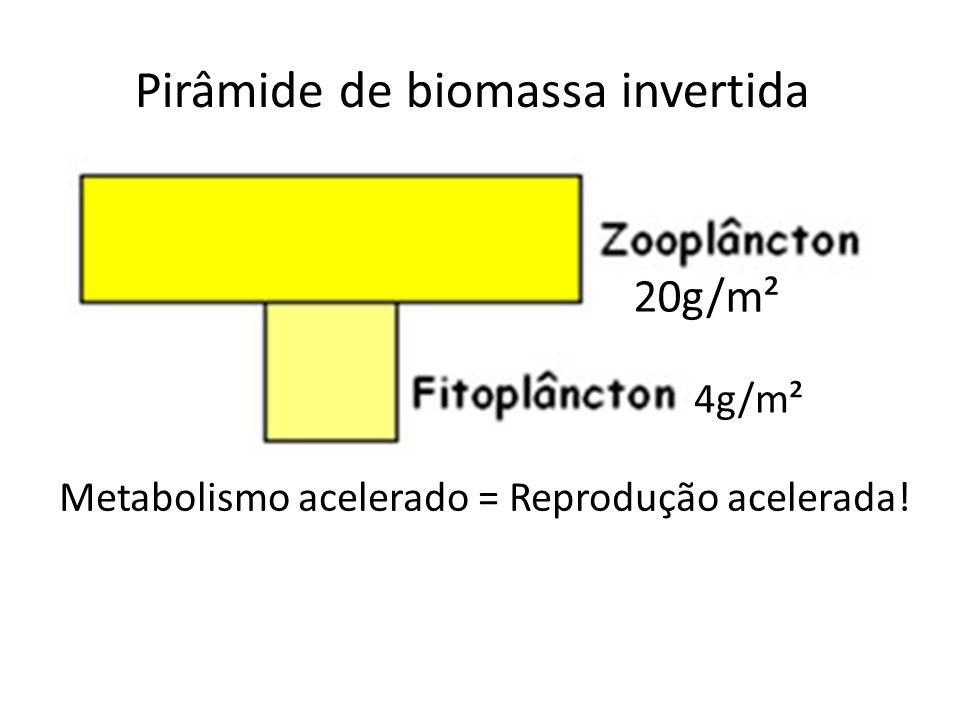 Pirâmide de biomassa invertida