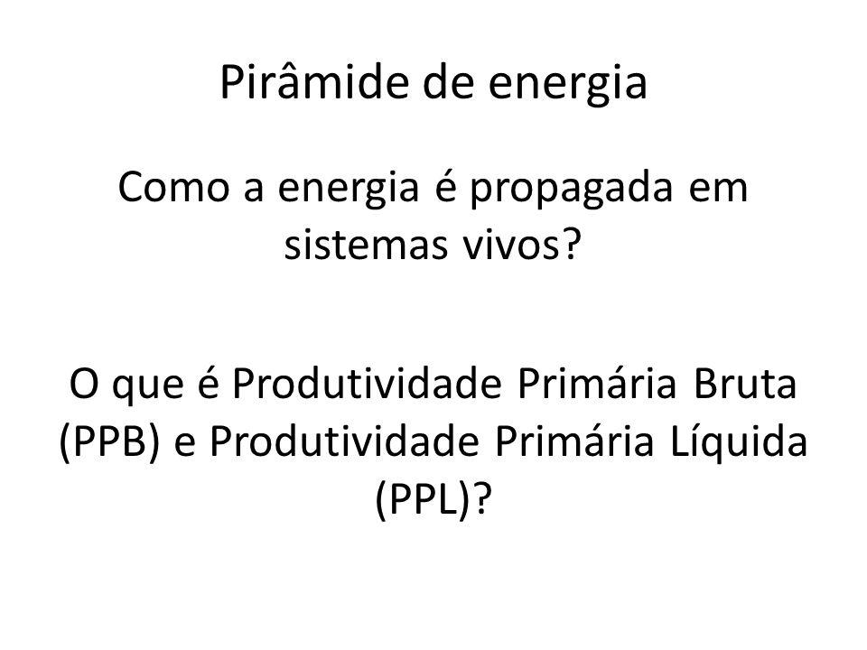 Pirâmide de energia Como a energia é propagada em sistemas vivos.