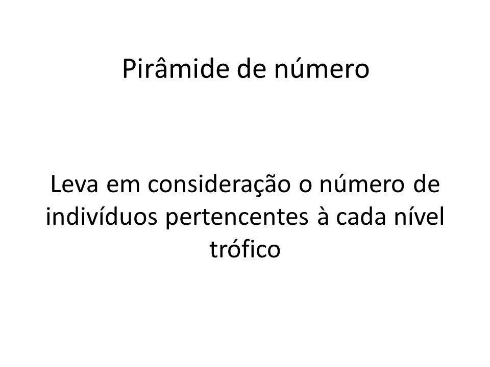 Pirâmide de número Leva em consideração o número de indivíduos pertencentes à cada nível trófico