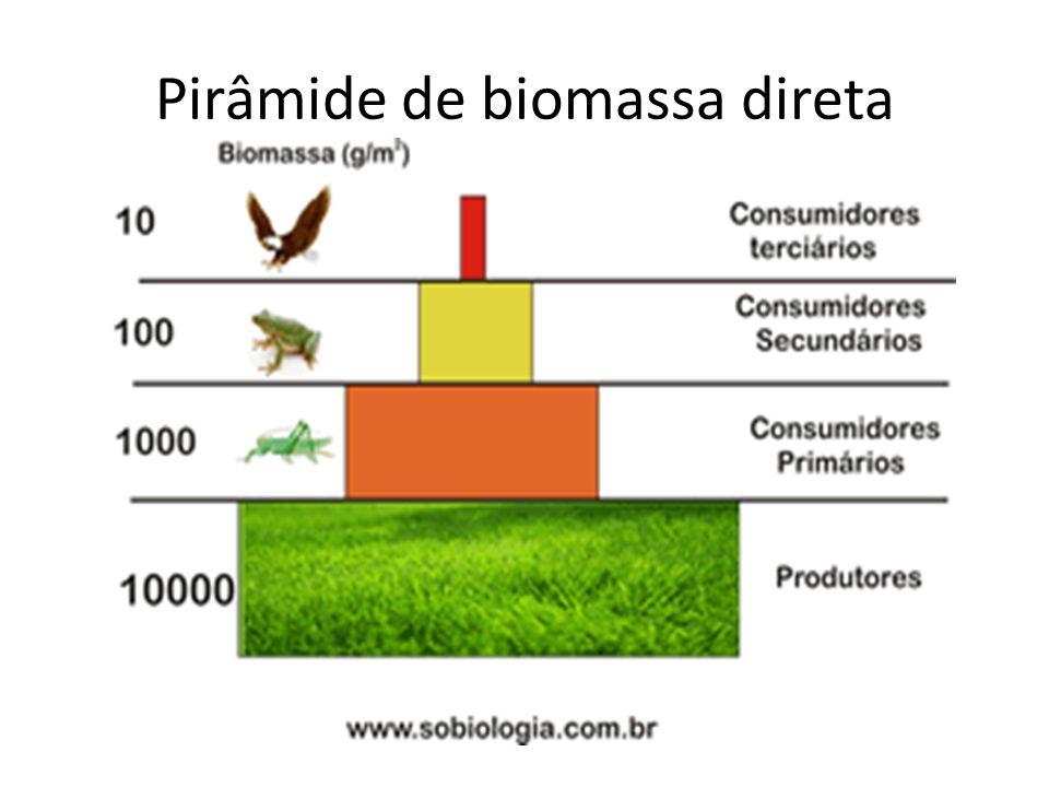 Pirâmide de biomassa direta