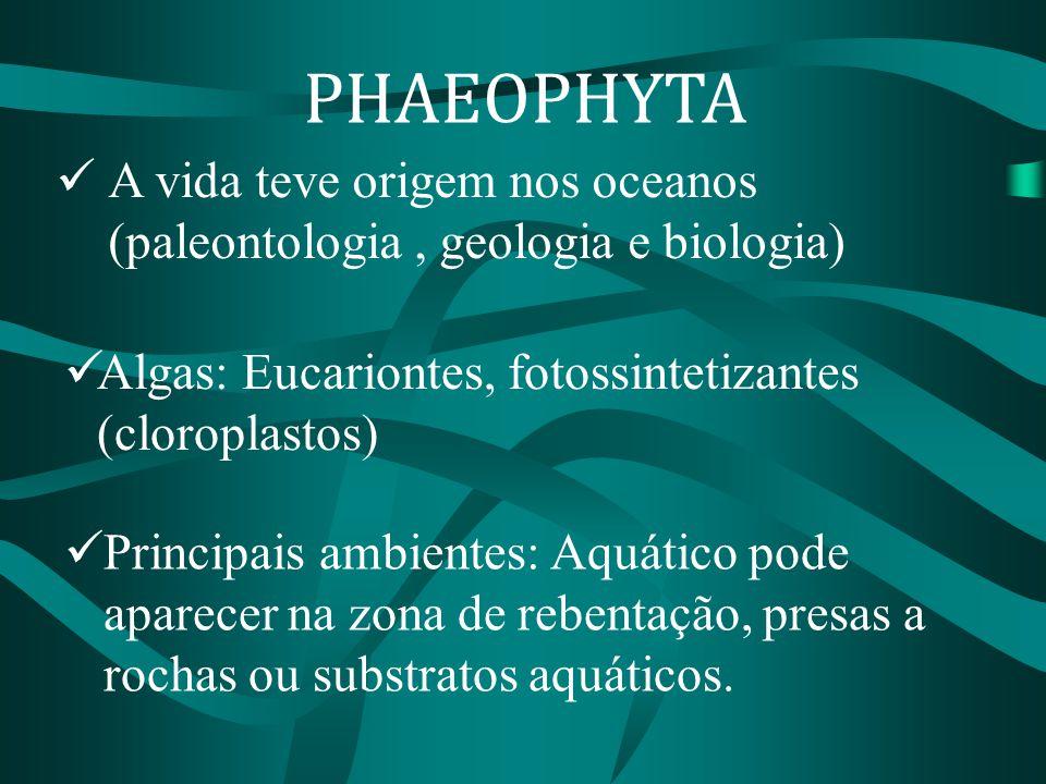 PHAEOPHYTA A vida teve origem nos oceanos (paleontologia , geologia e biologia) Algas: Eucariontes, fotossintetizantes (cloroplastos)
